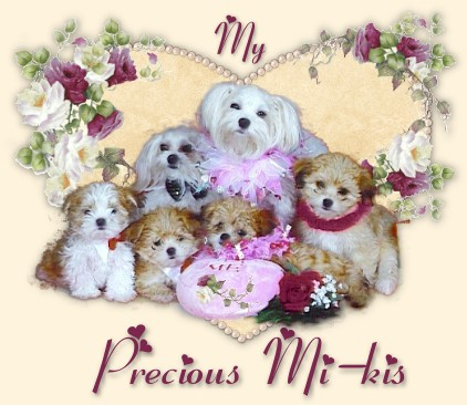 My Precious Mi-kis -  Dogs & Puppies